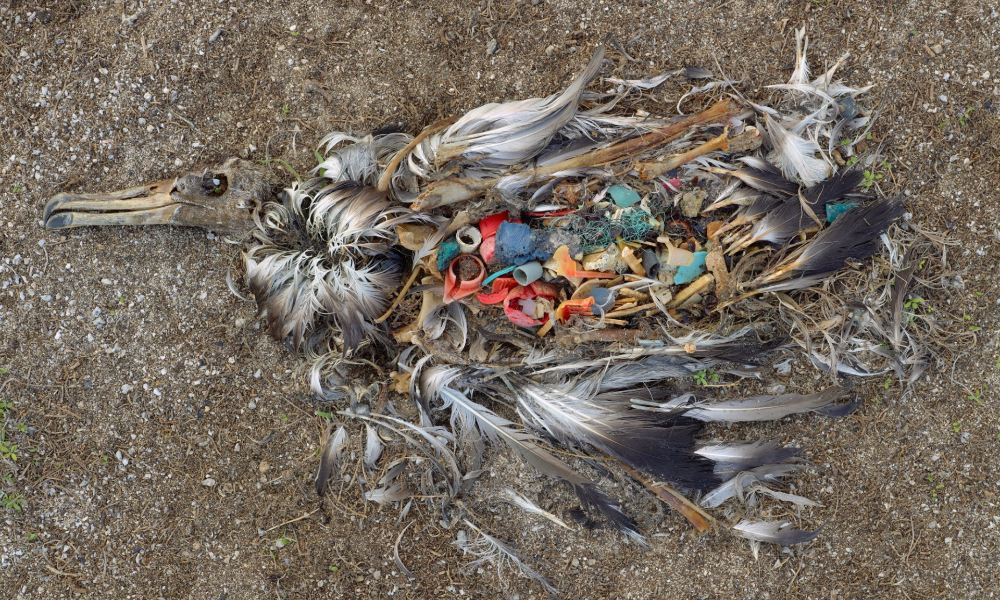 13 Powerful Photos Of Overpopulation And Overconsumption ...