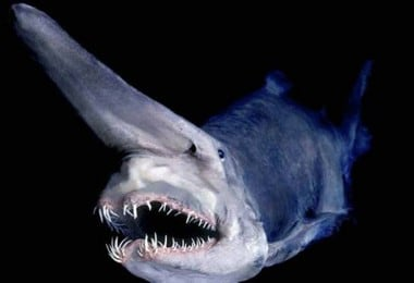 Bizarre Fish Living In The Deepest Part Of The Ocean 6