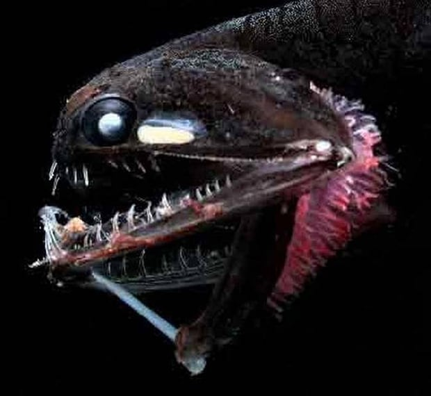 Anglerfish. It looks like it's holding a glow in the dark dagger in its hand.