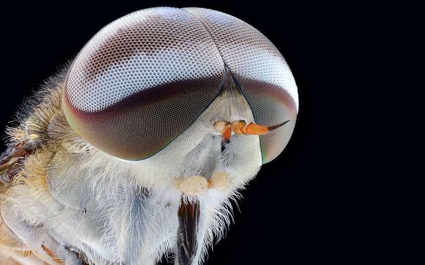 Extreme Macro Close-Ups Of Insect Faces by Yudy Sauw -photographer, nature, insects