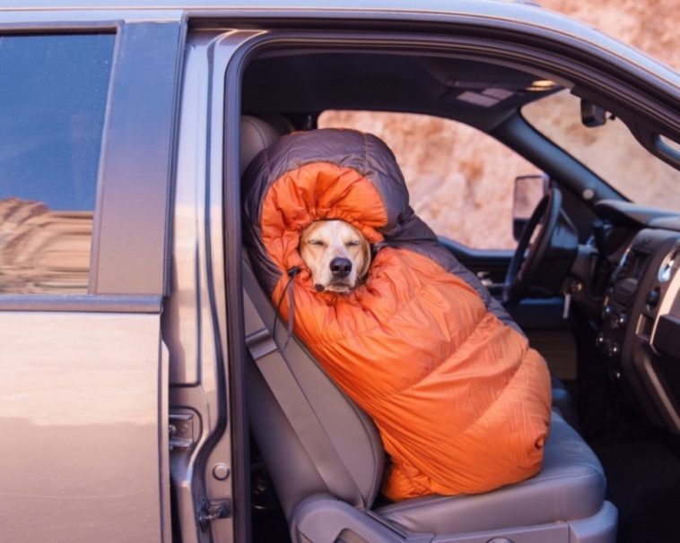 16045660 R3L8T8D 900 8483 33ef 960 1 758x606 - Rescued Dog Maddie Goes On Epic Adventures With His Photographer Owner