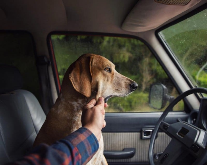 16046060 R3L8T8D 900 dog traveling car motorcycle maddie on road 4 - Rescued Dog Maddie Goes On Epic Adventures With His Photographer Owner