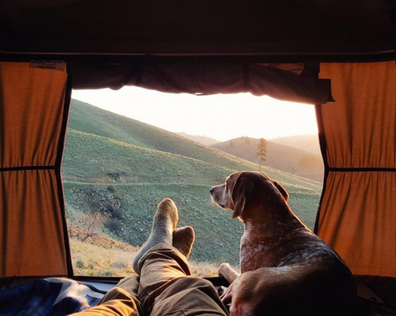Rescued Dog Maddie Goes On Epic Adventures With His Photographer Owner -