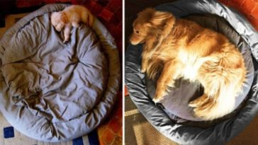 15 Before And After Photos of Puppies Show They Grew Up Too Fast -puppies, dogs