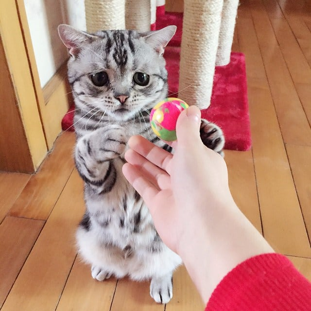 This Is Quite Possibly The Saddest And The Cutest Cat You've Ever Seen -sweet, sad, cute, cat