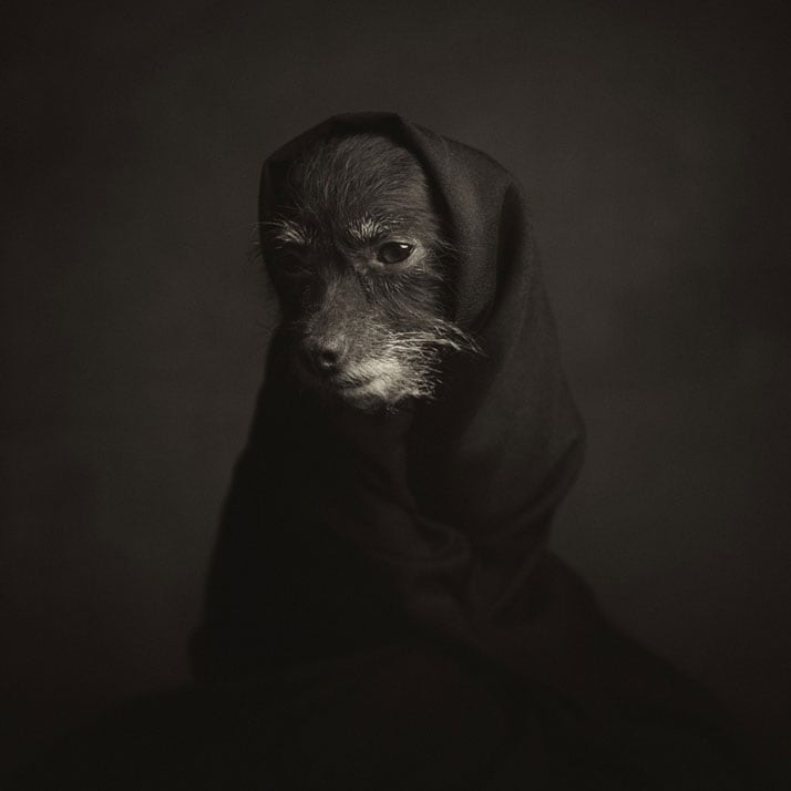 Vincent Legrange Expressive Animal Portraits 2 - Dramatic Animals Portraits Expose Their Human-Like Emotions