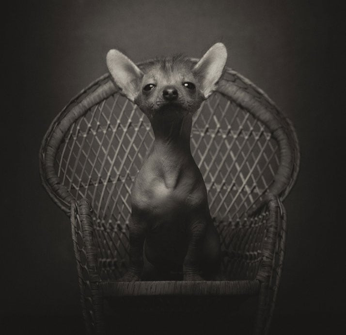 Vincent Legrange Expressive Animal Portraits 6 - Dramatic Animals Portraits Expose Their Human-Like Emotions