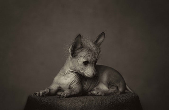 Vincent Legrange Expressive Animal Portraits 7 - Dramatic Animals Portraits Expose Their Human-Like Emotions