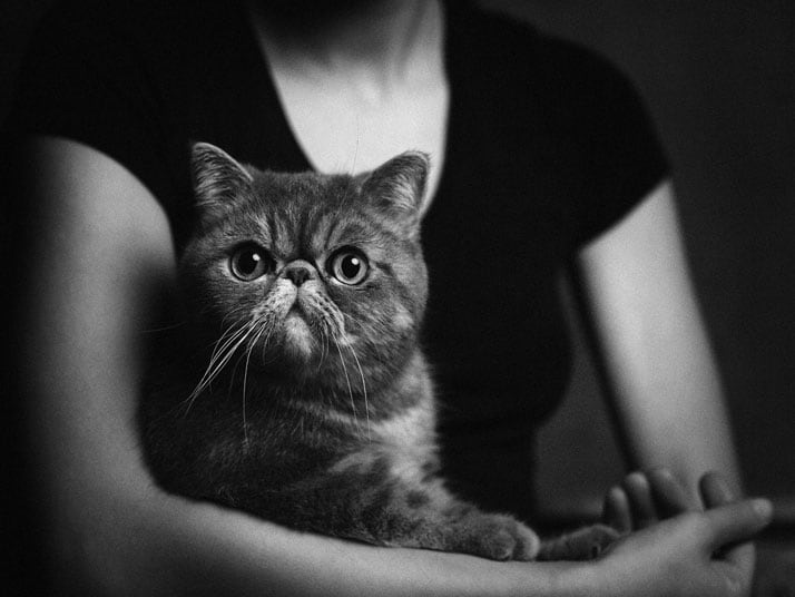 Vincent Legrange Expressive Animal Portraits 8 - Dramatic Animals Portraits Expose Their Human-Like Emotions