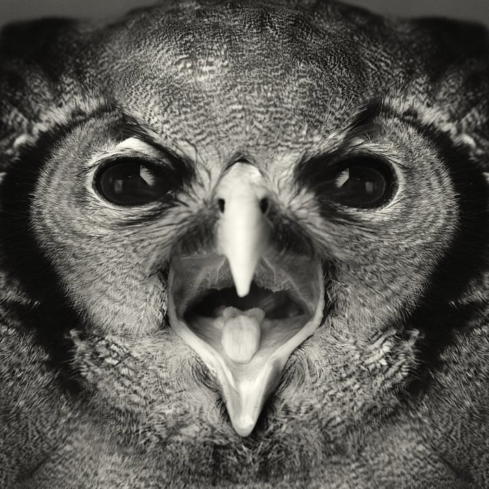 Vincent Legrange Expressive Animal Portraits 9 - Dramatic Animals Portraits Expose Their Human-Like Emotions