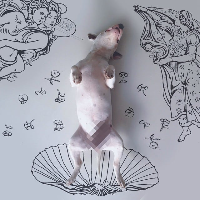 jimmy-choo-bull-terrier-illustrations-rafael-mantesso-12