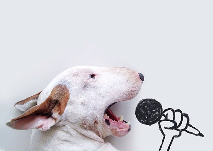 jimmy-choo-bull-terrier-illustrations-rafael-mantesso-coverimage