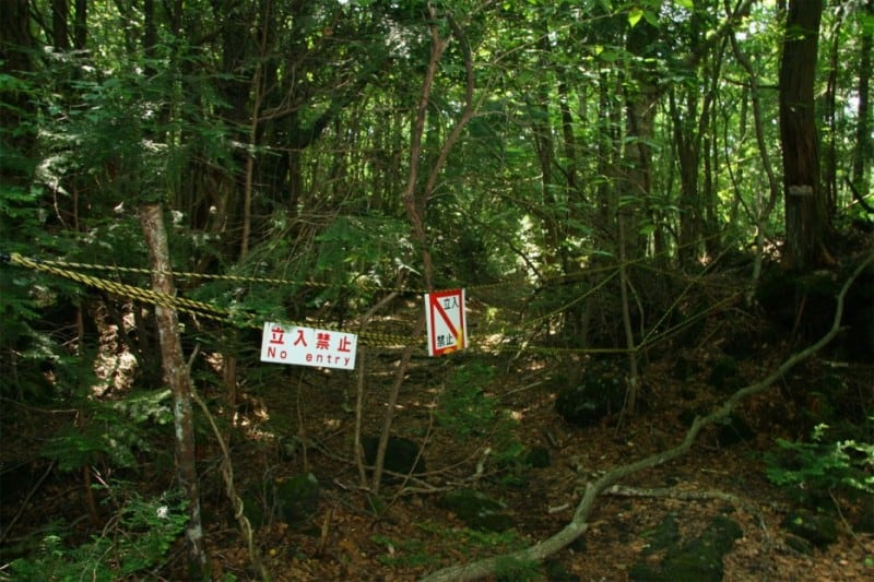 These Are The Weirdest 15 Forests You Will See In Your Life -forest
