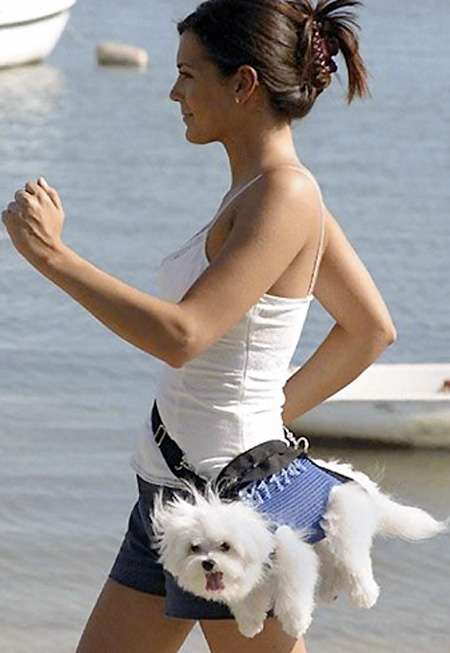 Fanny Pack for Your Dog