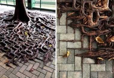 These-Tree-Roots-Displays-The-True-Magic-Of-Nature
