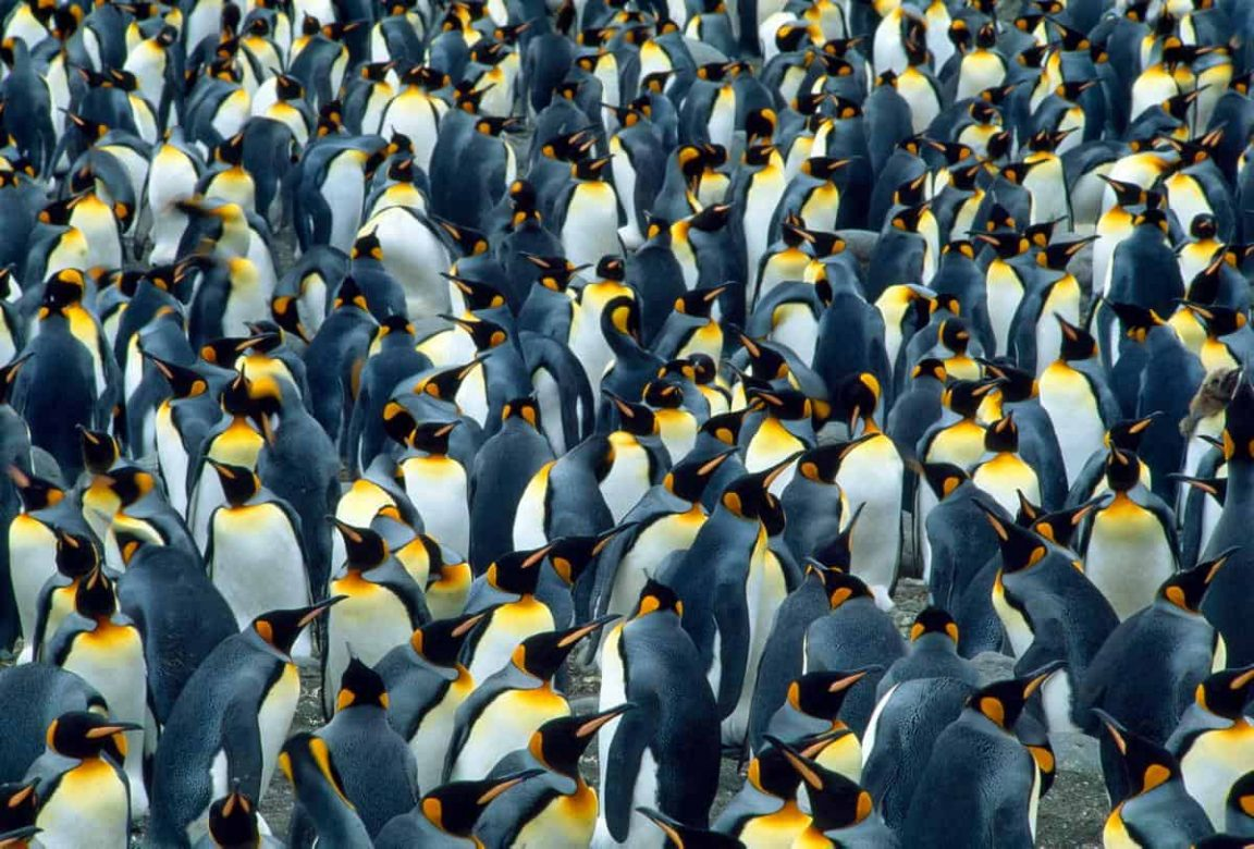 Spectacular Images Of Hundreds Of Animals Grouped Together In The Wild -photography, animals