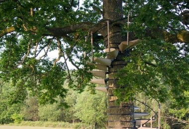 canopy-tree-stairs-thor-ter-kulve-robert-mcintyre-canopystair-2