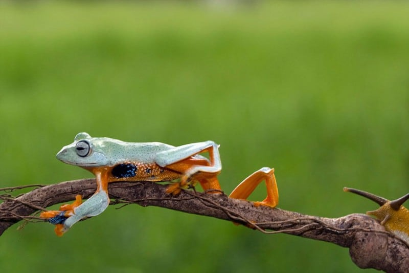 funny-animals-frog-riding-snail-kurito-afsheen-indonesia-6