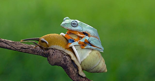 funny-animals-frog-riding-snail-kurito-afsheen-indonesia-thumb640