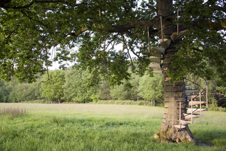 Band This Winding Staircase Onto Any Tree Without Any Tools -trees, stairs