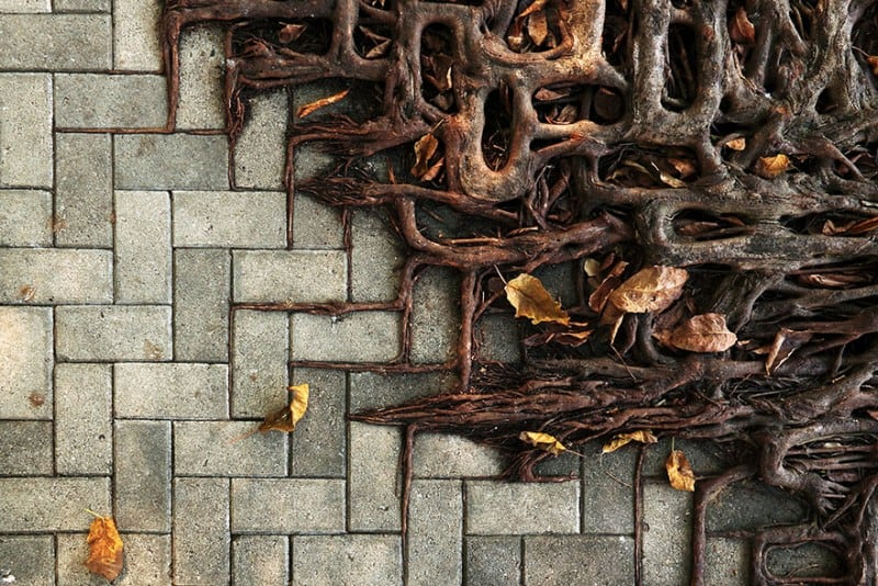 These Tree Roots Displays The True Magic Of Nature