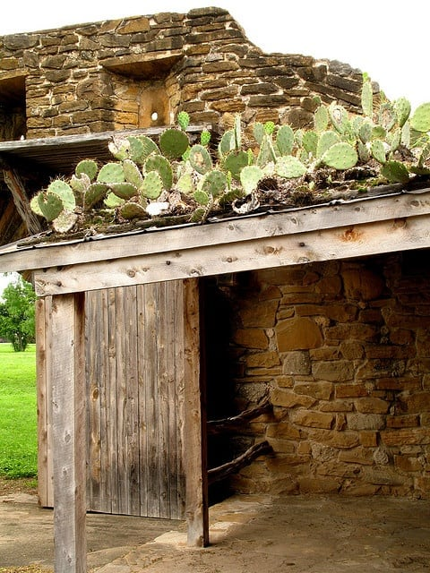 Extraordinary: Cactus Covered Rooftop -gardening