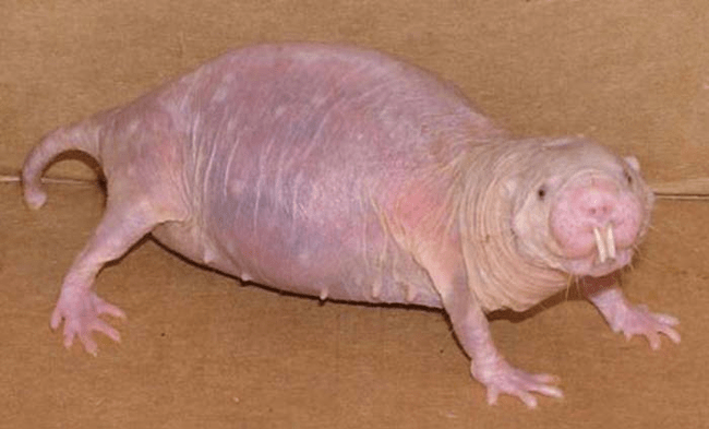 The 18 Creepiest-Looking Animals That Will Bring You Nightmares -nature, creepy, animals