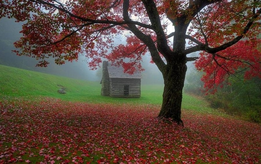 the-most-beautiful-abandoned-cabins-waiting-for-owners-to-come-14