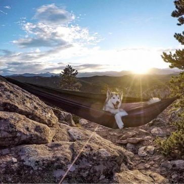 Heartwarming Photos Feature Adventurous Bond Between Pups and Humans -photo, outdoors, nature, dogs