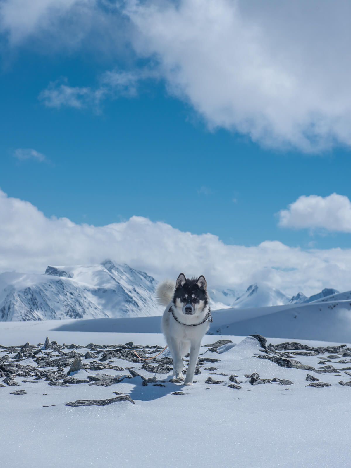 Akiak-the-adventure-dog-freeyork-5