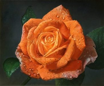 Large-scale Paintings of Roses Covered in Dewdrops Capture Every Small Detail -paintings, hyper-realistic, flowers, feat