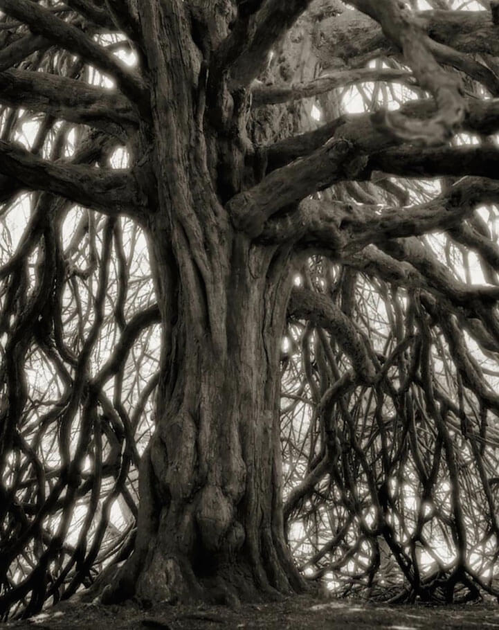 Photographer's Unbelievable 14-Year Quest to Photograph the World's Most Majestic Trees -trees, photo, black and white
