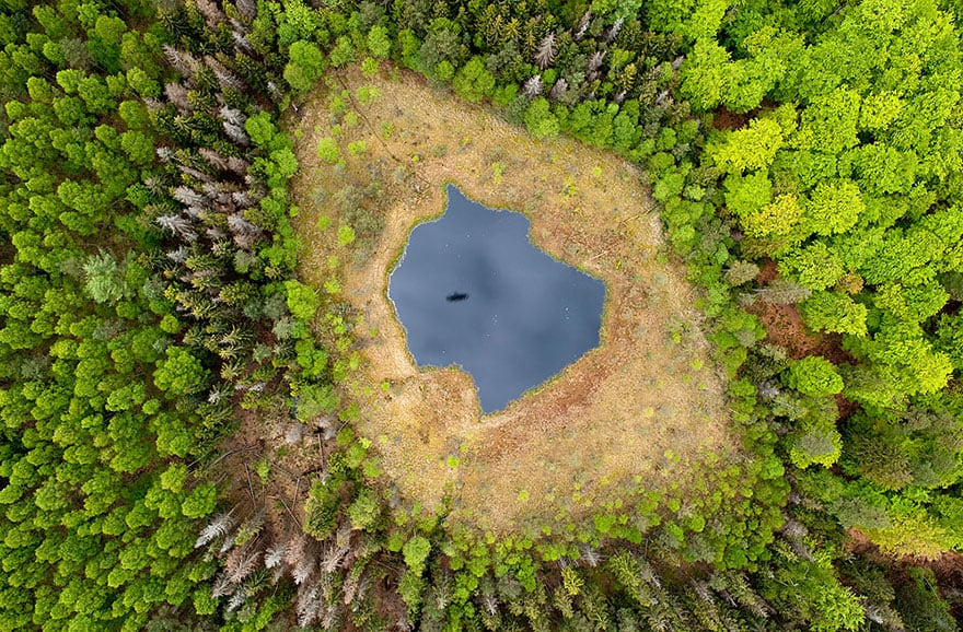 Forest Lake In Poland
