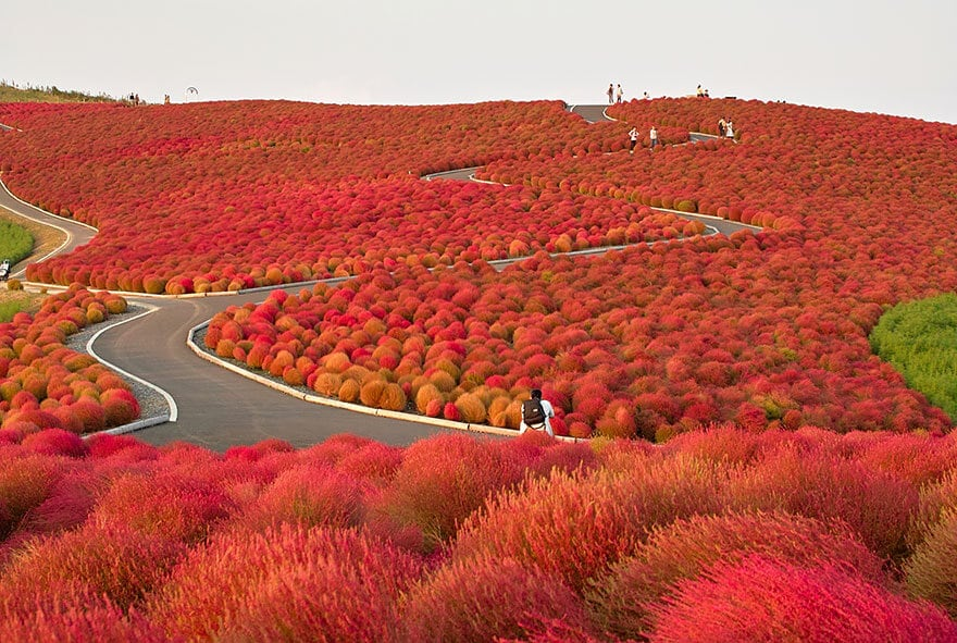 Hitachi Seaside Park, Japan (1)