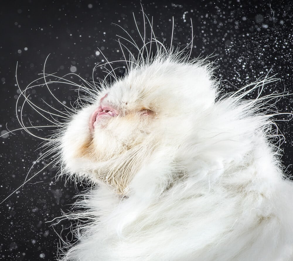 Ridiculously Adorable Cats Photographed Mid-Shake by Carli Davidson -Video, photo, cats, animals, adorable, adoption