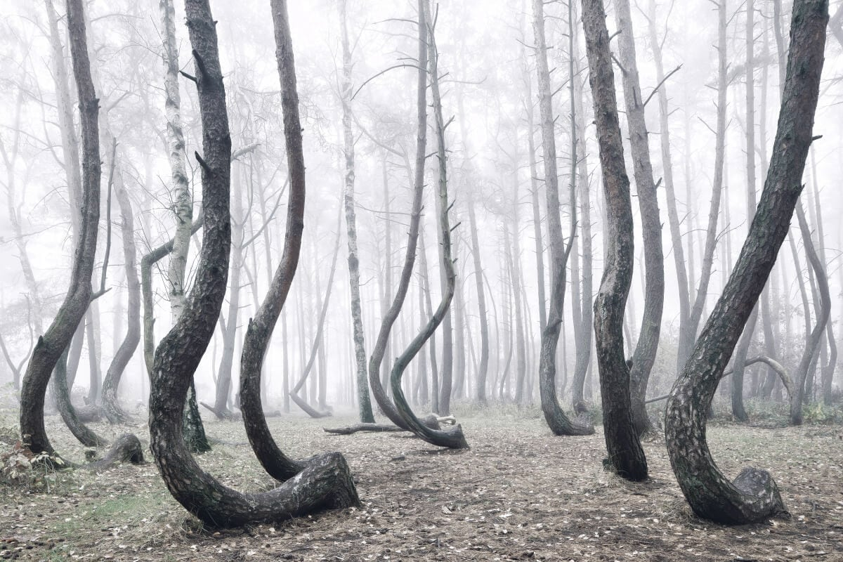 crooked-forest-freeyork-1
