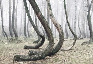 crooked-forest-freeyork-2