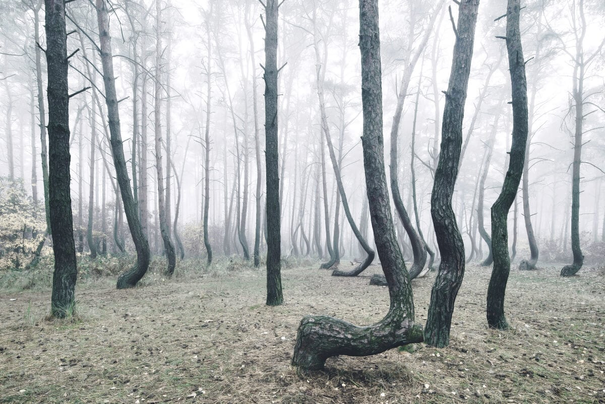 crooked-forest-freeyork-3