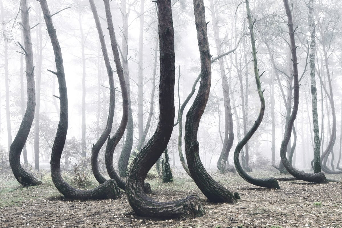 crooked-forest-freeyork-4