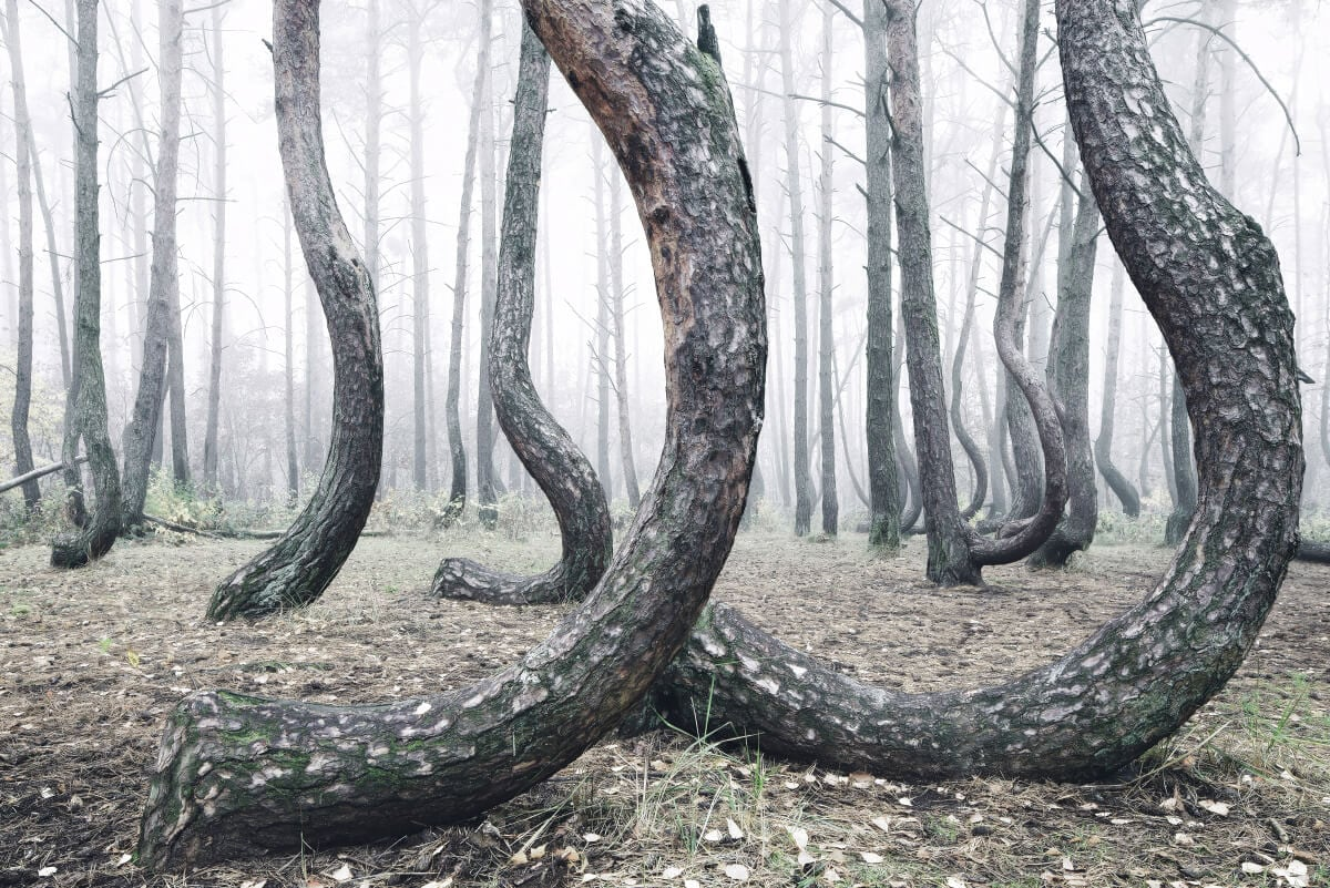 crooked-forest-freeyork-6