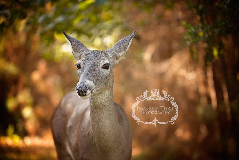 deer-newborn-photoshoot-freeyork3