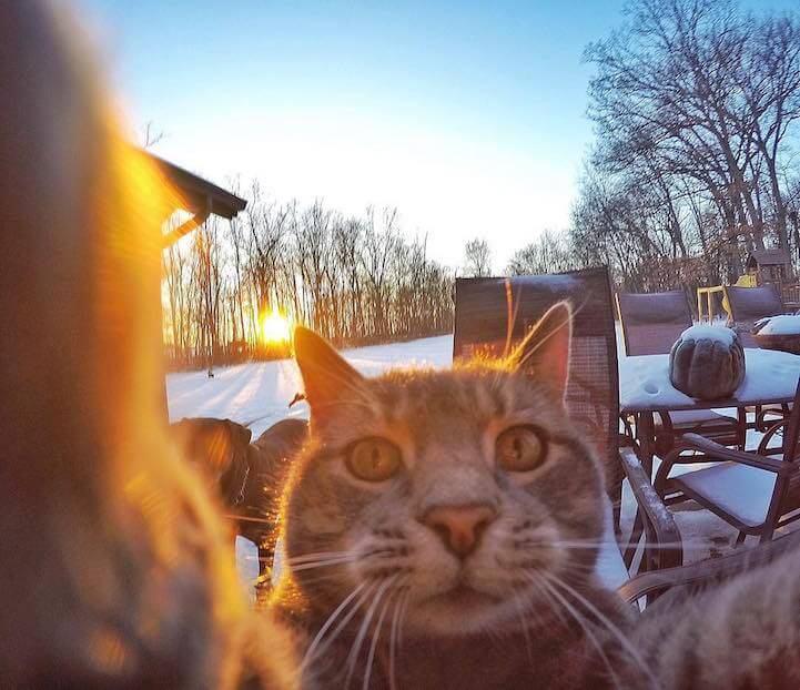 The Selfie Cat: Photogenic Cat Nails the Art of Taking Selfies -selfie, photo, cat