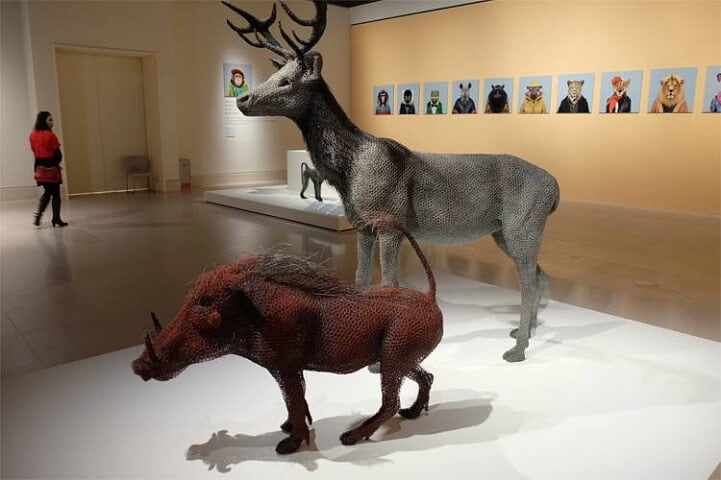 kendra haste fy 13 - Artist Creates Life-Size Animal Sculptures Made Completely Out of Wire