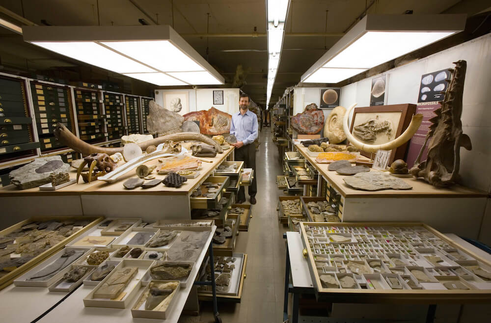 Explore the Large Scientific Collections of National Museum of Natural History -museums, collection
