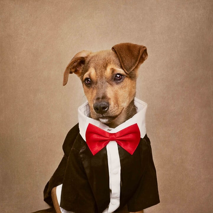 These Stylish Portraits Gives Shelter Dogs a Second Chance at Life -photo, dogs, adoption