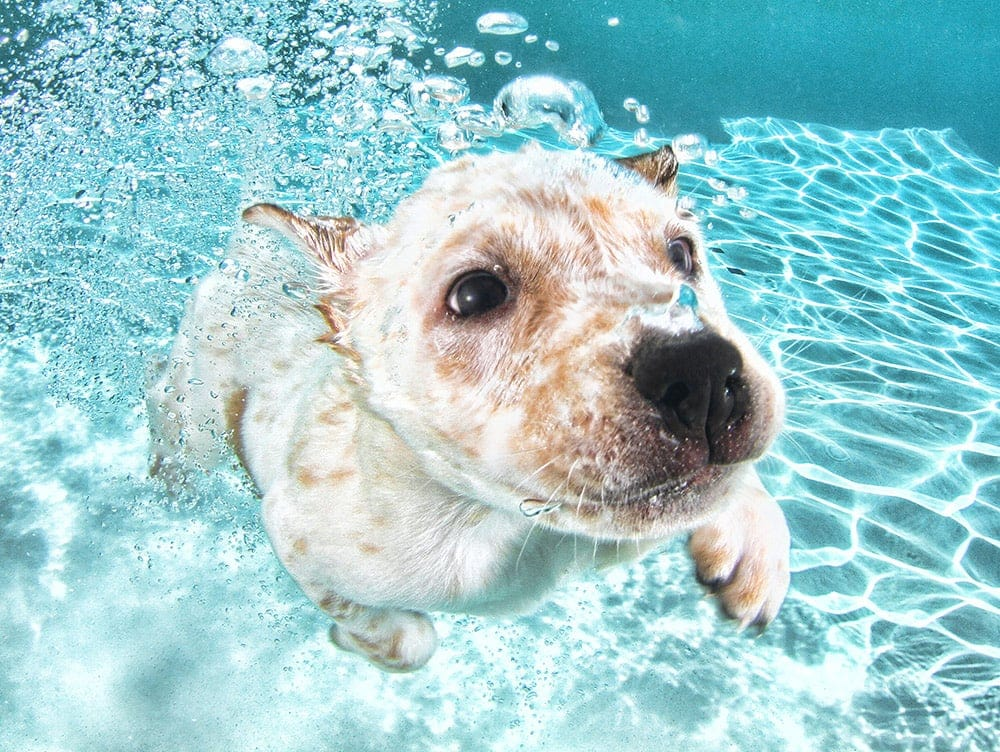 Seth Casteel's Cute Puppies Learning To Swim -underwater photography, underwater, Seth Casteel, puppies