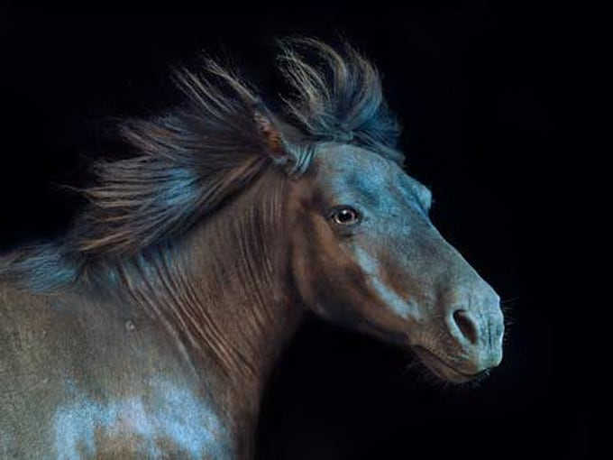 All the Wild Horses by Andrew McGibbon -photo session, horses