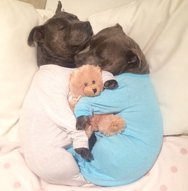 These Cute Pups Really Love Cuddling While Wearing Pajamas -puppies, dogs