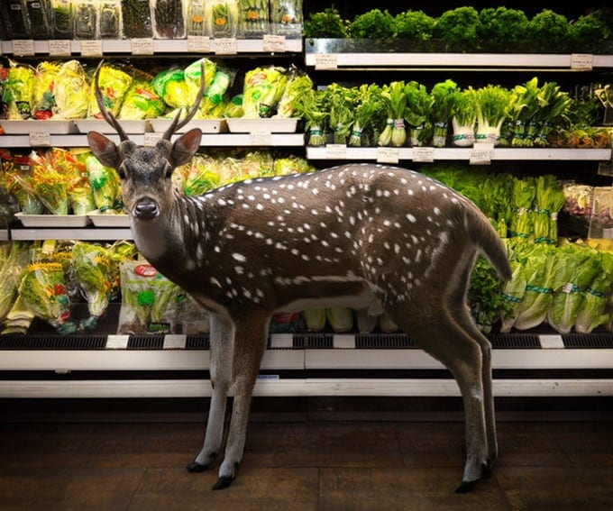 Garden Fresh by Agan Harahap 6.jpeg - Animals in the Supermarket