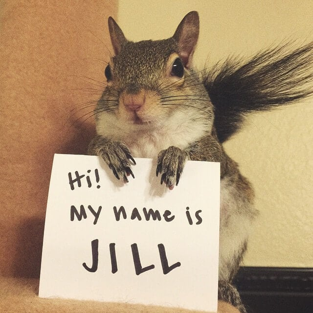 Cute Squirrel Lives Life to the Fullest After Being Rescued from a Hurricane -photo, Instagram, animals, adorable